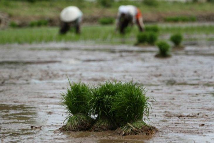 Nilai tukar petani Sumbar naik